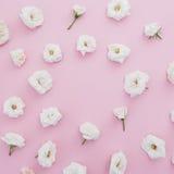 Флористическая рамка сделанная белых роз на розовой предпосылке Плоское положение, взгляд сверху playnig света цветка предпосылки Стоковое Фото