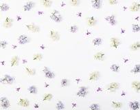 Флористическая рамка сделанная из изолированных цветков сирени весны на белой предпосылке Взгляд сверху с космосом экземпляра Стоковые Изображения RF