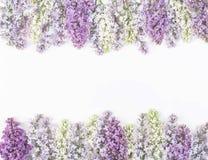 Флористическая рамка сделанная из изолированных цветков сирени весны на белой предпосылке Взгляд сверху с космосом экземпляра Стоковое Изображение