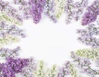 Флористическая рамка сделанная из изолированных цветков сирени весны на белой предпосылке Взгляд сверху Плоское положение Стоковое фото RF