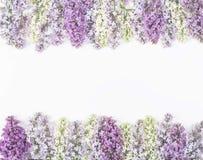 Флористическая рамка сделанная из изолированных цветков сирени весны на белой предпосылке Взгляд сверху Плоское положение Стоковая Фотография RF