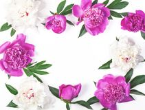 Флористическая рамка сделанная из розовых и белых изолированных цветков и листьев пиона на белой предпосылке Плоское положение Стоковые Изображения RF