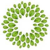 Флористическая рамка сделанная от свежих зеленых листьев Взгляд сверху, творческий план Стоковое Фото