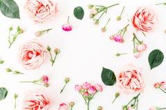 Флористическая рамка с розовыми розами и листьями на белой предпосылке Плоское положение, взгляд сверху зеленый цвет рамки констр Стоковое Изображение