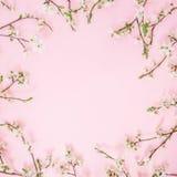 Флористическая рамка цветков весны изолированных на розовой предпосылке Плоское положение, взгляд сверху Предпосылка времени весн Стоковая Фотография RF