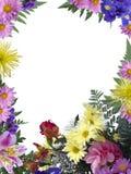 флористическая рамка Стоковое Фото