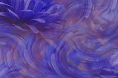 Флористическая сине-фиолетовая красивая предпосылка тюльпаны цветка повилики состава предпосылки белые Лепестки цветков вокруг ст Стоковые Изображения RF