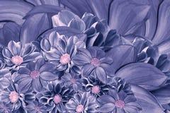 Флористическая сине-фиолетовая предпосылка цветков георгина цветок расположения яркий Букет голубых георгинов Стоковые Изображения