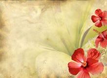 флористическая старая бумажная текстура картины Стоковое Изображение RF