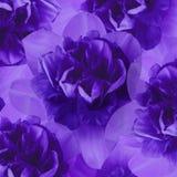 Флористическая фиолетовая предпосылка daffodils тюльпаны цветка повилики состава предпосылки белые Конец-вверх Стоковые Изображения RF