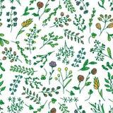 Флористическая яркая безшовная картина с красочным вектором цветков Стоковая Фотография