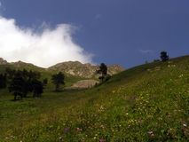 флористические горы glade стоковые фотографии rf