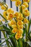 Флористические дизайны внутри парк Диснейленда Стоковые Изображения RF