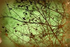 флористические текстуры Стоковые Изображения RF