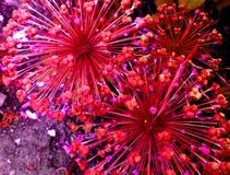 Флористические фейерверки стоковые изображения rf