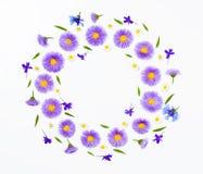Флористический венок сделанный фиолетовых цветков и стоцвета на белом bakground Плоское положение Взгляд сверху Стоковое Изображение RF