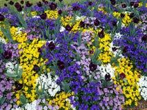 Флористический дисплей в ботанические сады Стоковые Фотографии RF