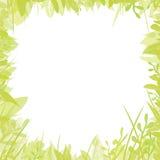 флористический зеленый цвет рамки иллюстрация вектора