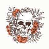 Флористический людской череп Иллюстрация года сбора винограда анатомии татуировки также вектор иллюстрации притяжки corel иллюстрация штока