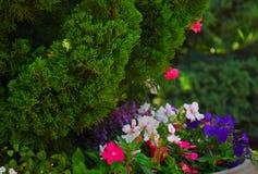 флористический сад стоковое изображение rf