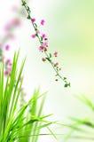 флористический свежий пинк травы Стоковые Фото