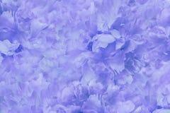 Флористический свет - голубая красивая предпосылка Обои пиона цветков сине-белого тюльпаны цветка повилики состава предпосылки бе Стоковое Фото