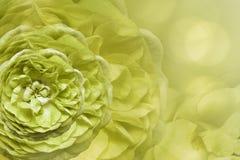Флористический свет - желтая красивая предпосылка тюльпаны цветка повилики состава предпосылки белые Поздравительная открытка от  Стоковое Изображение RF