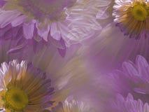 Флористический свет - пинк - белая красивая предпосылка маргаритки Обои стоцвета цветков розов-желтого тюльпаны цветка повилики с Стоковые Фото