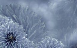 Флористический свет - розовая красивая предпосылка георгинов тюльпаны цветка повилики состава предпосылки белые Предпосылка розов Стоковое Фото