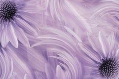 Флористический свет - розовая красивая предпосылка Поздравительная открытка маргаритки цветков тюльпаны цветка повилики состава п Стоковое Изображение