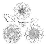 Флористический симметричный набор цветков лета Цветок Doodle руки вычерченный Иллюстрация вектора плана на белой предпосылке Собр иллюстрация вектора