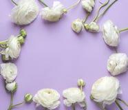 Флористический состав с цветком стоковое фото rf