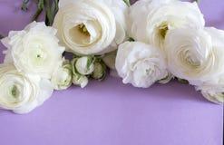 Флористический состав с цветком стоковое изображение
