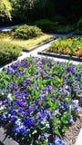 Флористический flowerbed цветет авиапорт людей зоны стоковые фотографии rf
