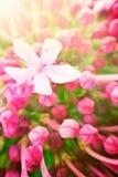 флористическое абстрактной предпосылки красивейшее Стоковое Фото