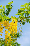 флористическое золотистое стоковые фотографии rf