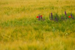 флористическое предпосылки красивейшее Стоковые Фотографии RF