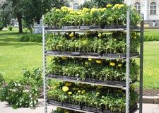 флористическо много напольных ростков шкафа стоковое фото