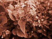 флористическо стоковая фотография rf