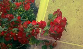 флористическо стоковое фото