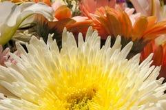 флористическо Стоковое Изображение RF