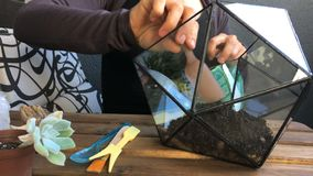 Флорист женщины льет почву к стеклянному геометрическому terrarium Вид спереди Конец-вверх акции видеоматериалы