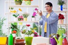 Флорист садовника работая в цветочном магазине с заводами дома Стоковые Изображения RF