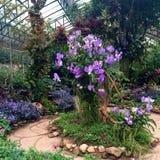 Фокусировать на большом дереве с фиолетовой орхидеей в саде зеленого дома стоковые фотографии rf