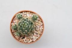 Фокус взгляд сверху кактуса мягкий Стоковые Фото