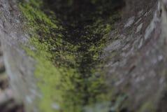Фокус водорослей Стоковое Фото