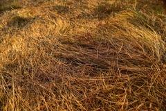 Фокус желтой текстуры поля трав выборочный стоковая фотография