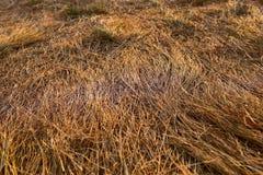 Фокус желтой текстуры поля трав выборочный стоковые фото