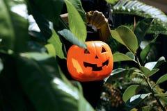 Фокус или обрабатывать на хеллоуине с фонариком jack o стоковое изображение rf