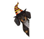 Фокус или обслуживание собаки призрака хеллоуина Стоковые Изображения RF